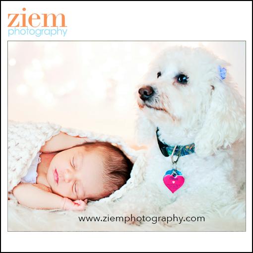 newborn photography austin newborn photographer
