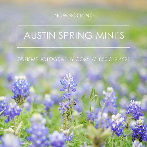austin bluebonnet locations mini sessions family child newborn photographers ziem photography