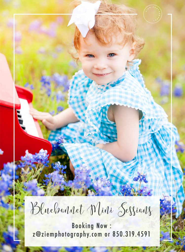 Austin Bluebonnet Mini Sessions Ziem Photography